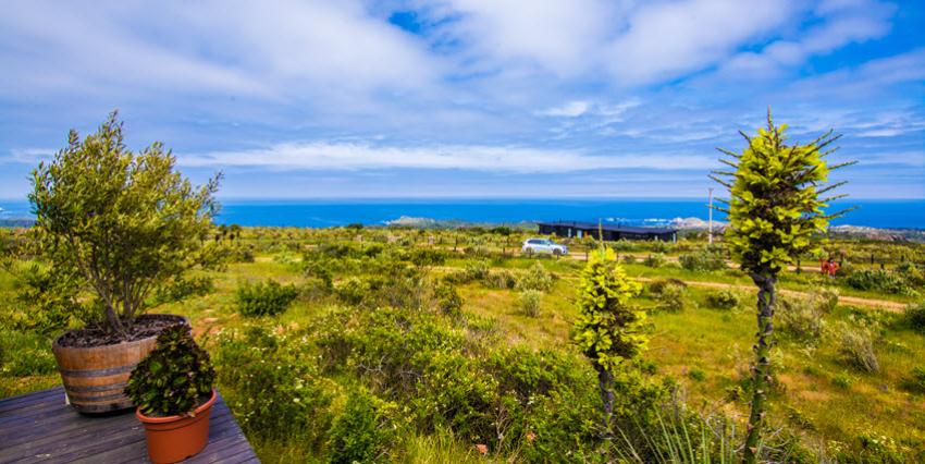 Proyecto Rocas del Mar - Sitios de Inmobiliaria Foresta del Mar-9