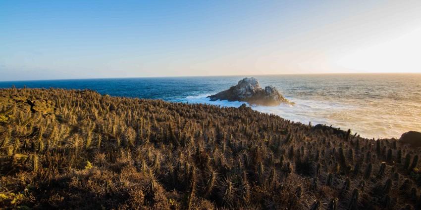 Proyecto Rocas del Mar - Sitios de Inmobiliaria Foresta del Mar-5