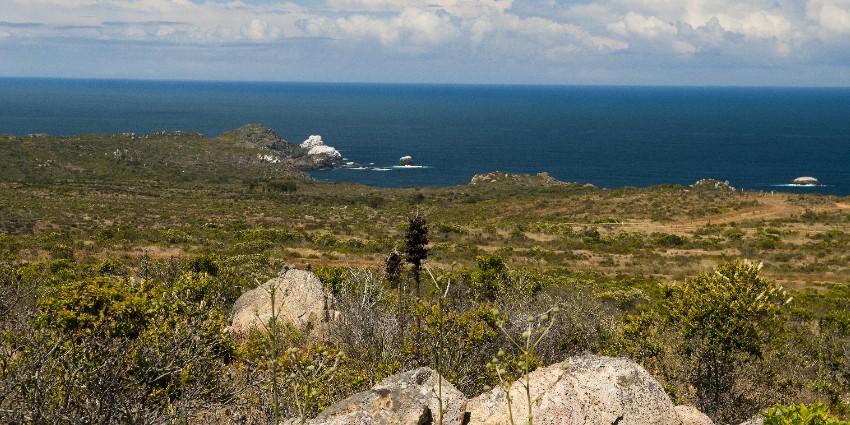 Proyecto Rocas del Mar - Sitios de Inmobiliaria Foresta del Mar